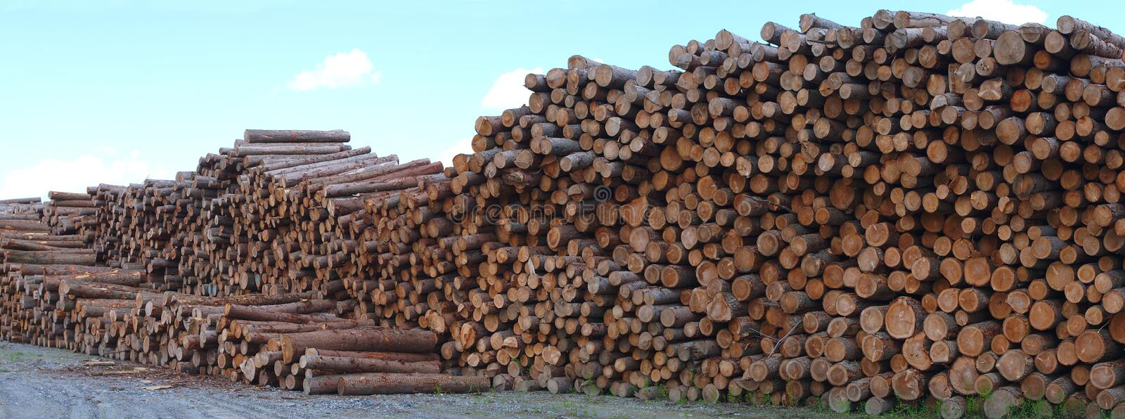 Lumber yard wood stack timber construction lumbering forestry cut. Lumber yard business timber stacked forest industry environment lumbering wood stock photography