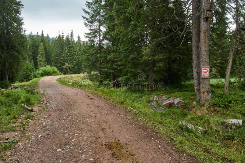 Lumbering след в лесе стоковое изображение rf
