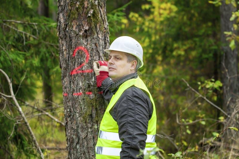 Lumberjack пишет на дереве стоковое фото rf