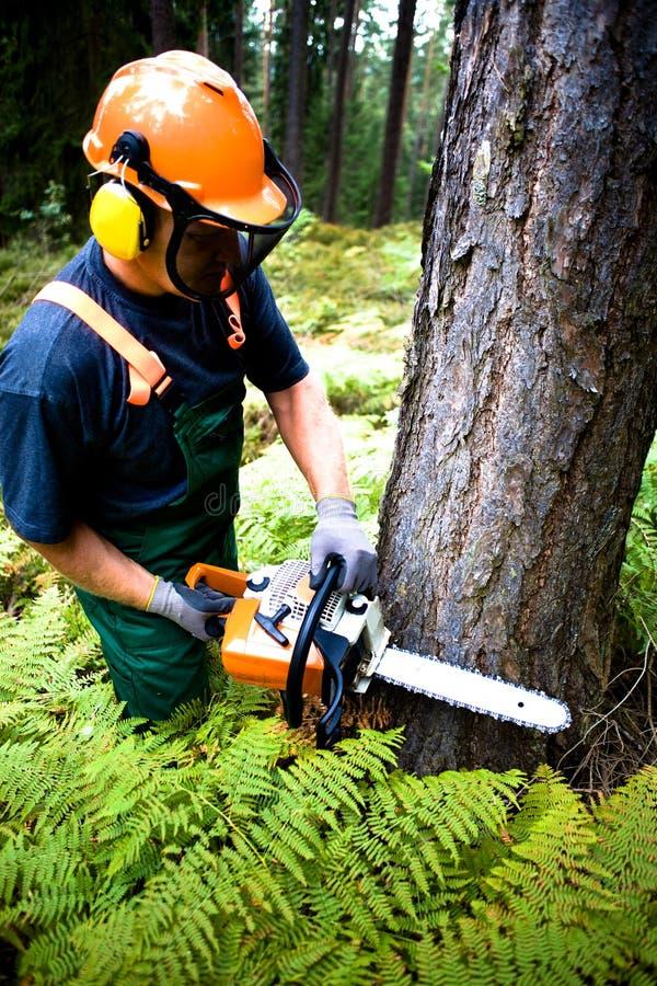 Lumberjack стоковое изображение rf