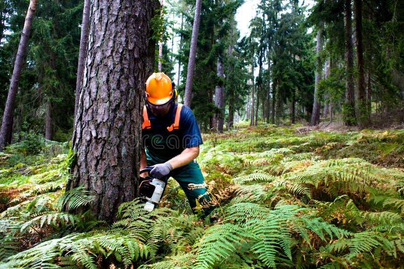 Lumberjack стоковое изображение