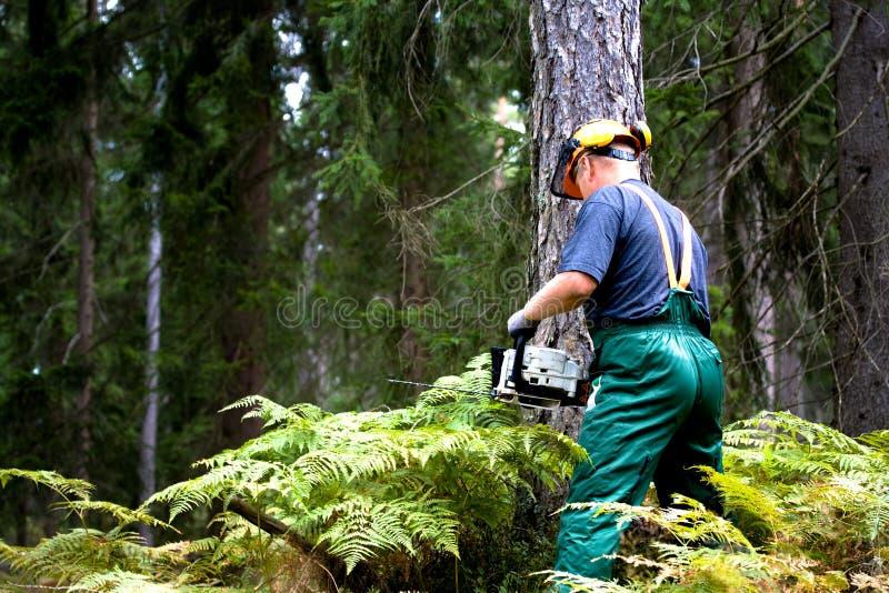Lumberjack arkivfoton
