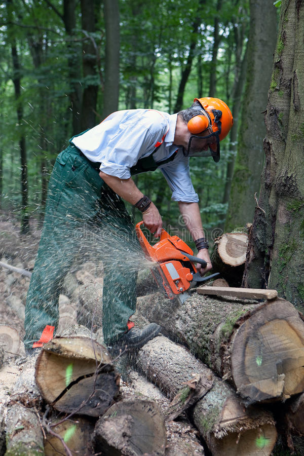 Lumberjack. Is working in the forest with protective clothing stock photo