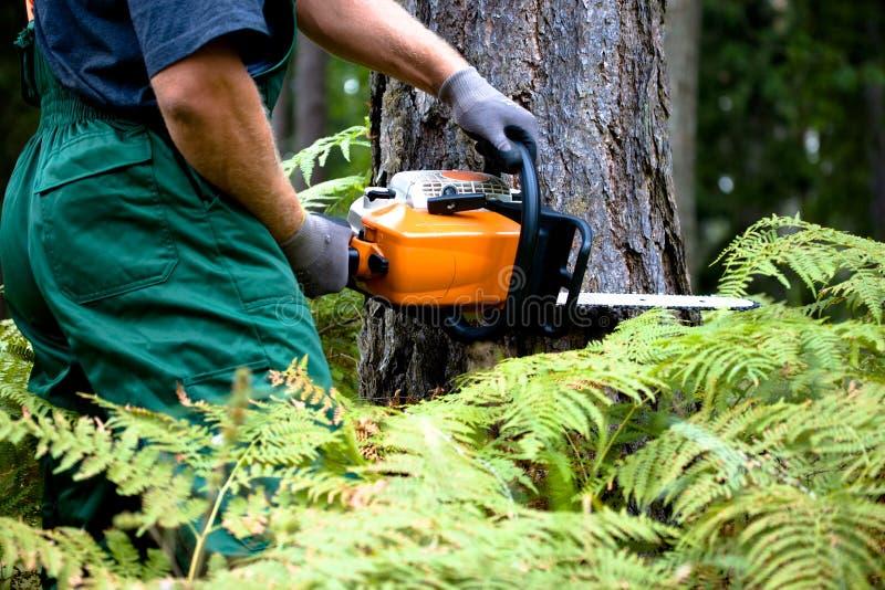 Lumberjack royaltyfri bild