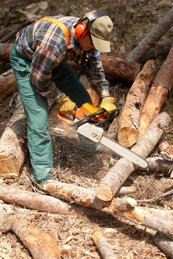Lumberjack. Operating a chainsaw in full protective gear royalty free stock photography
