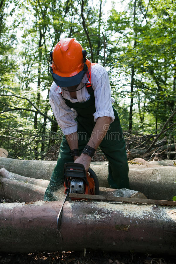 Lumberjack. Is working with protective clothing in the forest royalty free stock image