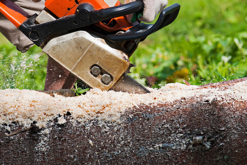 Lumberjack. Cutting the log of wood with petrol chainsaw royalty free stock images