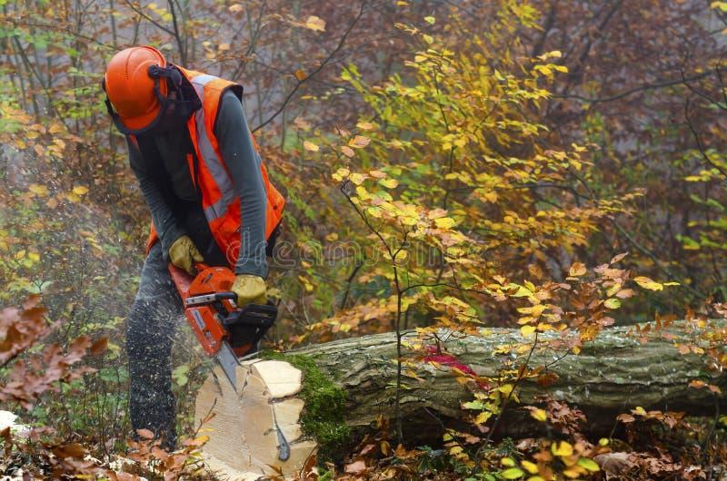 lumberjack royaltyfri foto