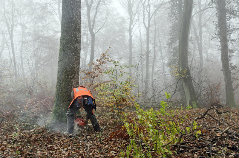 Lumberjack. A lumberjack at work in a misty forest stock images