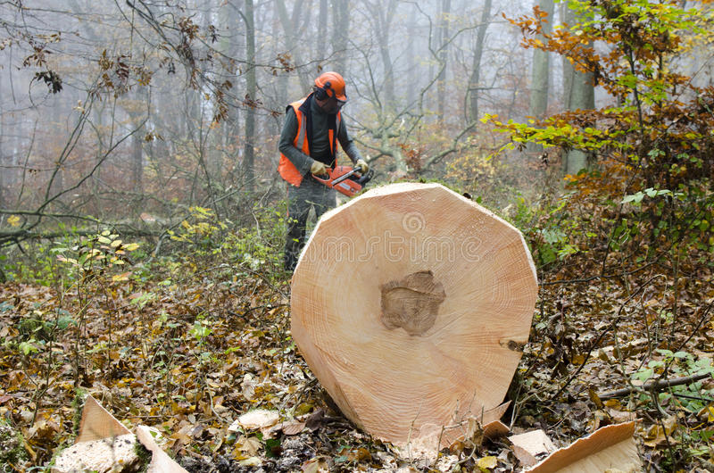Lumberjack. A lumberjack at work in a misty forest royalty free stock photos