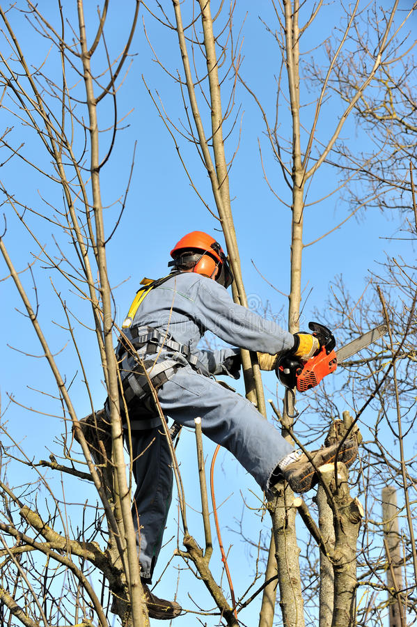 Lumberjack. A lumberjack who cuts a tree royalty free stock photography