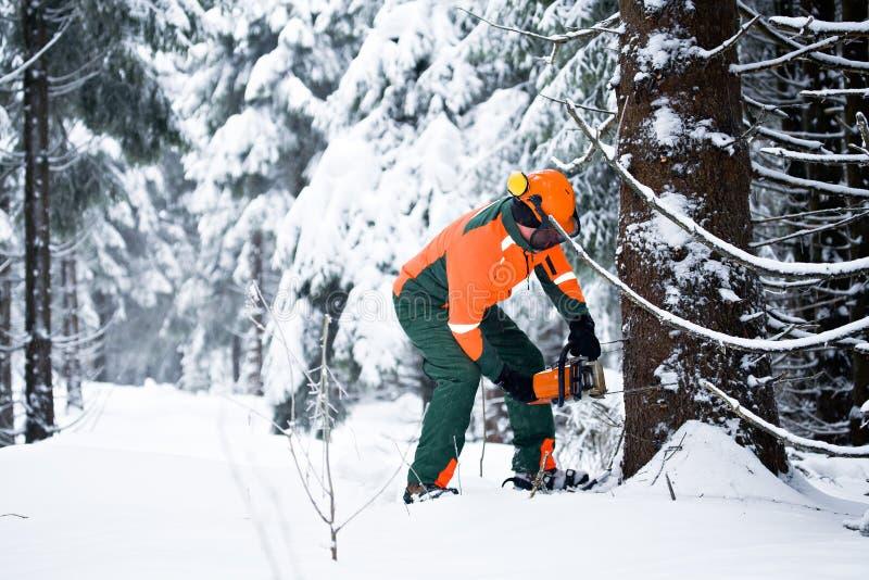 Lumberjack стоковые изображения