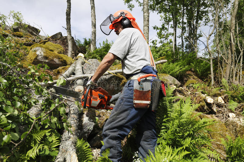 Lumberjack in action. Forest-worker, lumberjack in action, trees and forest royalty free stock image