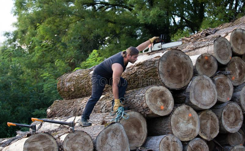 Lumberjack with ax and chainsaw climbing on logs. Young strong lumberjack with chainsaw and ax climbing on wooden logs pile royalty free stock photography