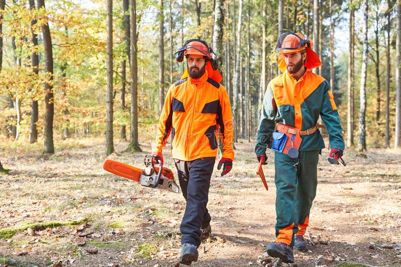 Lumberjack with chainsaw and protective clothing in the forest royalty free stock images