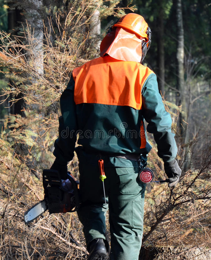 Lumberjack, chainsaw, walking. Lumberjack carrying a chainsaw and walking through the forest stock images