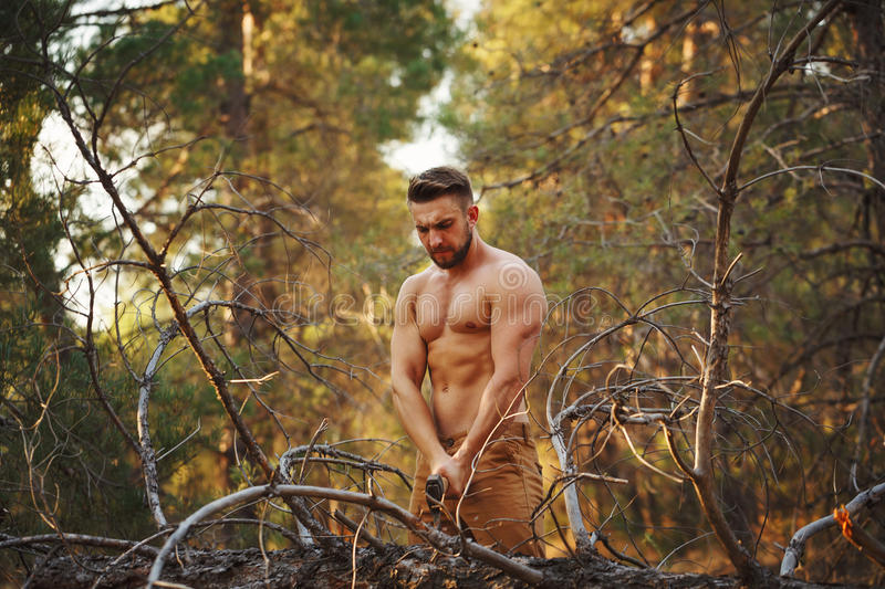 Lumberjack chop wood with an ax. Lumberjack chopping wood with an ax. Woodcutter with naked torso in the coniferous forest. Felling trees. Logging. Manual labor royalty free stock images