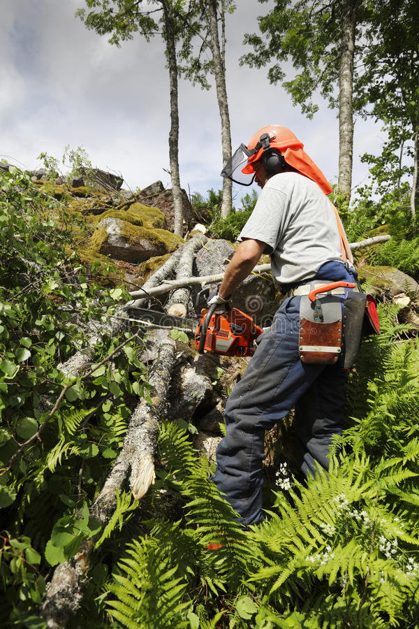 Lumberjack and forest works. Forest-worker, lumberjack in action, trees and forest royalty free stock image