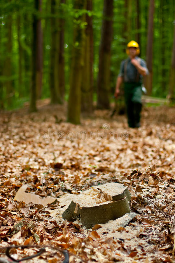 Free Lumberjack In Forest Royalty Free Stock Photo - 9451795
