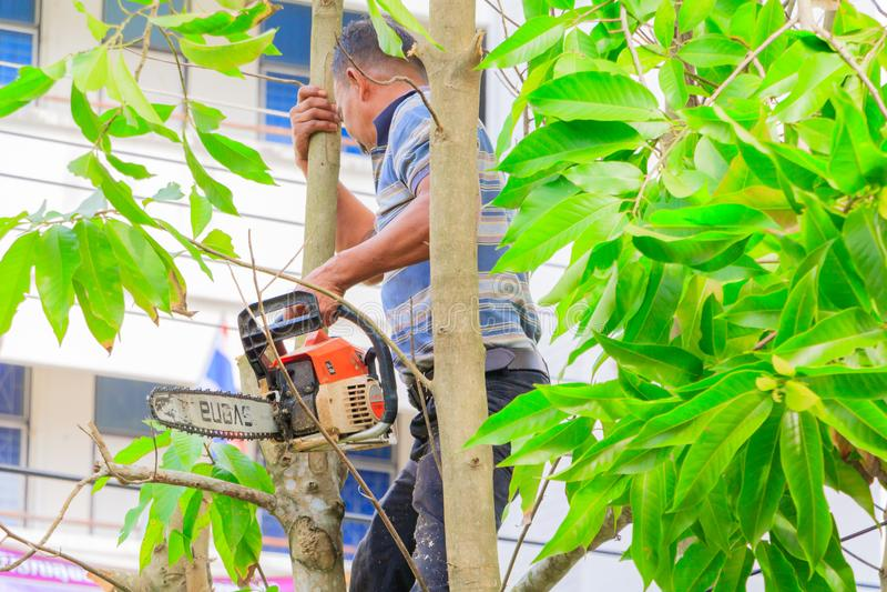 lumberjack mannen med såg klättring på trädet miljö för begreppsskogförstörelse och rörelsesågspån arkivfoton