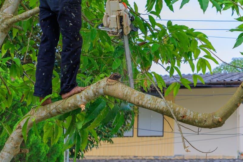 lumberjack mannen med såg klättring på trädet miljö för begreppsskogförstörelse och rörelsesågspån arkivfoto