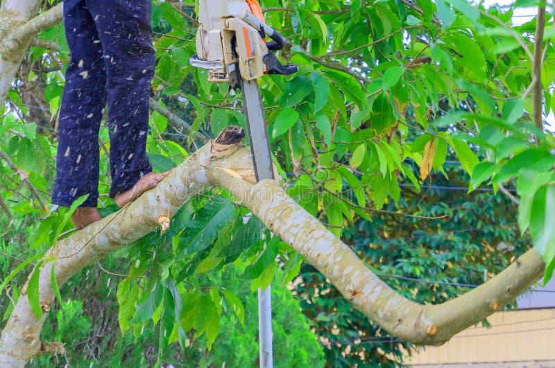 lumberjack mannen med såg klättring på trädet miljö för begreppsskogförstörelse och rörelsesågspån arkivbild