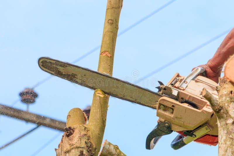lumberjack mannen med såg klättring på trädet miljö för begreppsskogförstörelse och rörelsesågspån fotografering för bildbyråer