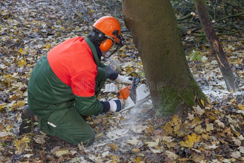 Lumberjack på arbete royaltyfri fotografi