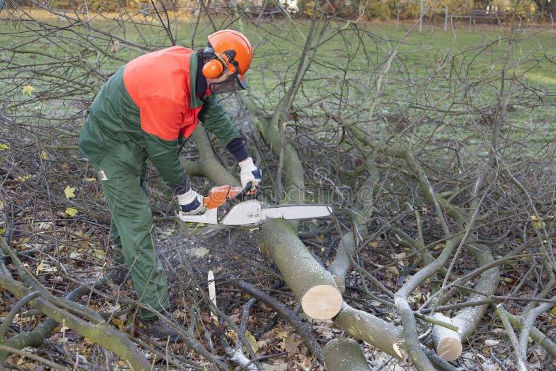 Lumberjack på arbete royaltyfria bilder