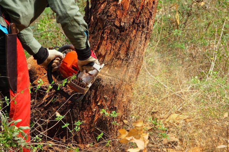 Lumberjack rozcięcie fotografia royalty free