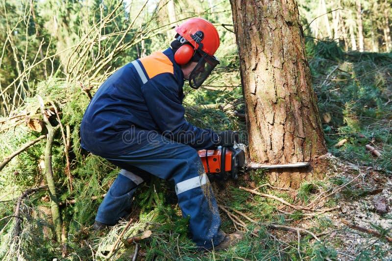 Lumberjack tnący drzewo w lesie zdjęcia stock