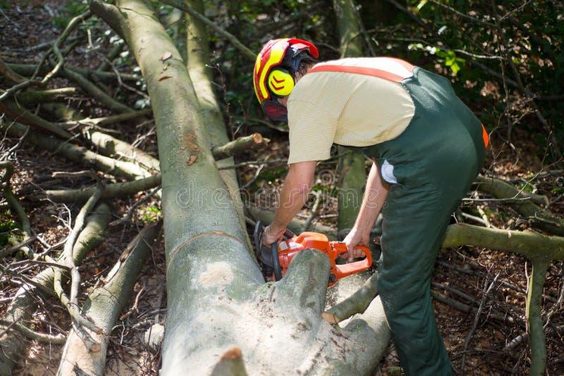 Lumberjack während der Arbeit mit Schutzkleidung stockfotografie