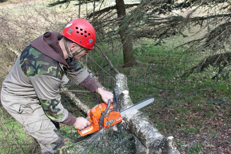 Download A Lumberjack Working With A Chainsaw Stock Photo - Image of firewood, orange: 39501692