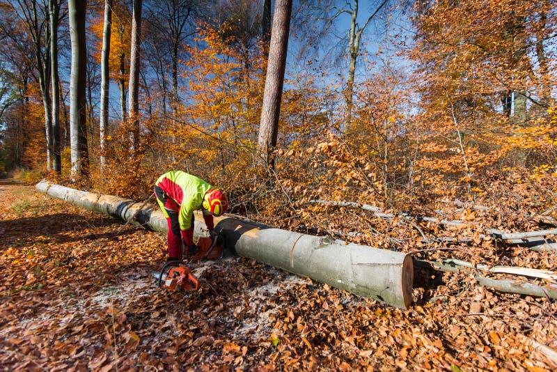 Lumberjack z ?a?cuszkowym saw obraz stock