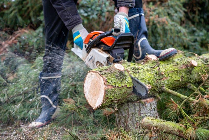 Lumberman with chainsaw cutting wood. Lumberman with worn chainsaw cutting wood royalty free stock photo