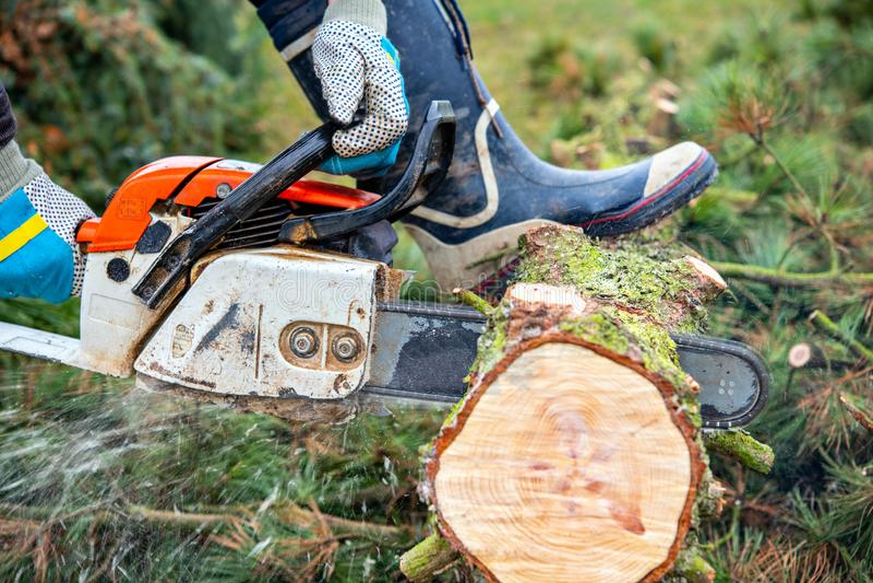 Lumberman with chainsaw cutting wood. Lumberman with worn chainsaw cutting wood royalty free stock photos