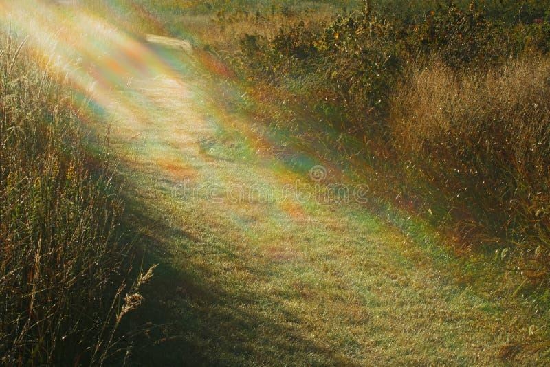 Lumière à mon chemin image libre de droits