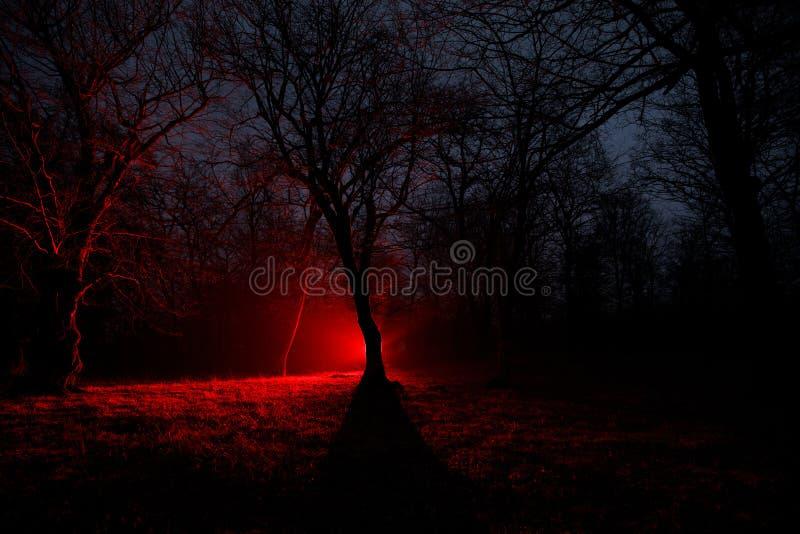 lumière étrange dans une forêt foncée la nuit Silhouette de personne se tenant dans la forêt foncée avec la lumière Nuit foncée d photo libre de droits