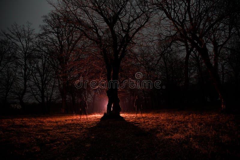 lumière étrange dans une forêt foncée la nuit Silhouette de personne se tenant dans la forêt foncée avec la lumière Nuit foncée d photos libres de droits