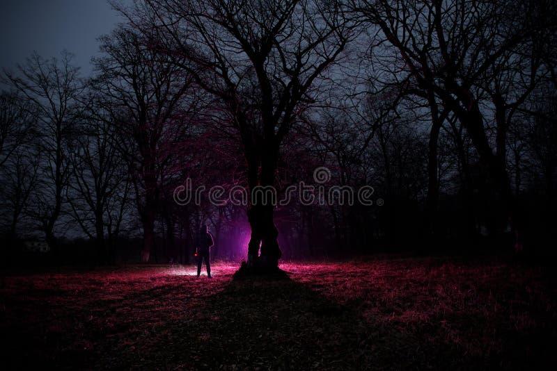 lumière étrange dans une forêt foncée la nuit Silhouette de personne se tenant dans la forêt foncée avec la lumière Nuit foncée d image stock