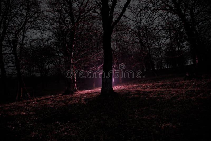 lumière étrange dans une forêt foncée la nuit Silhouette de personne se tenant dans la forêt foncée avec la lumière Nuit foncée d images stock