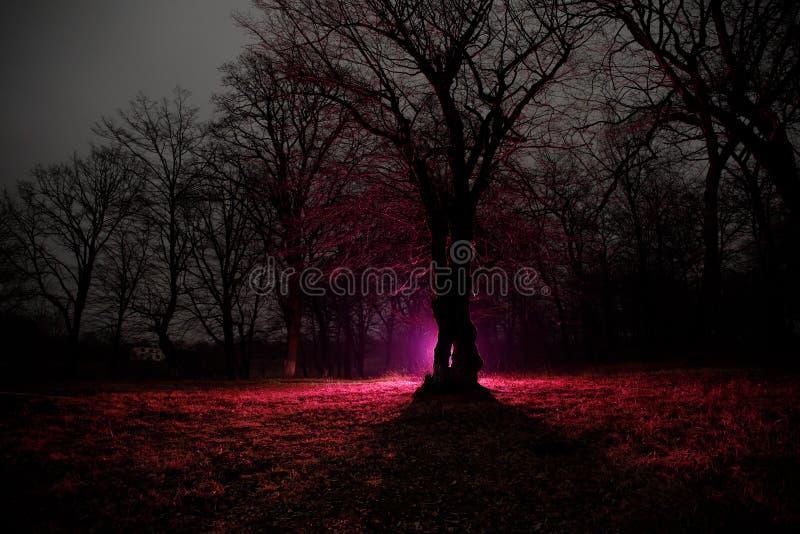 lumière étrange dans une forêt foncée la nuit Silhouette de personne se tenant dans la forêt foncée avec la lumière Nuit foncée d photographie stock