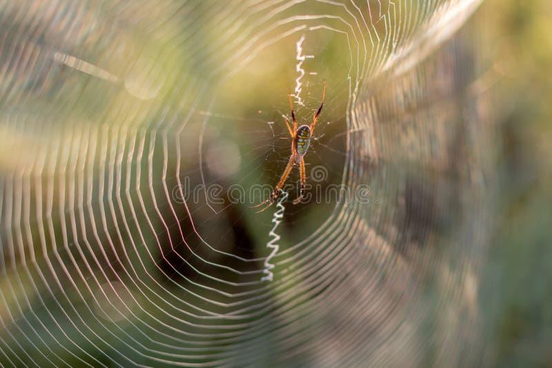 Lumière d'araignée-de retour avec le fond vert brouillé photos libres de droits