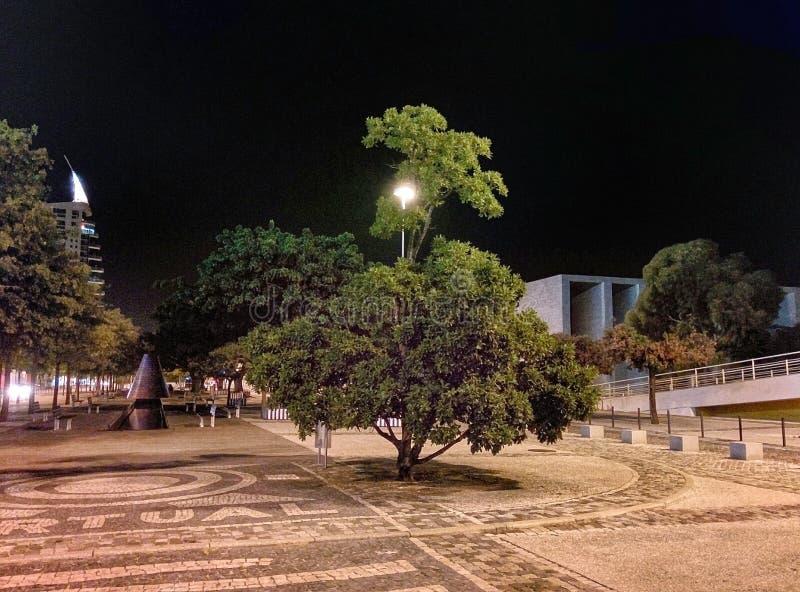 Lumière d'arbre dans le casino Lisbonne photos stock