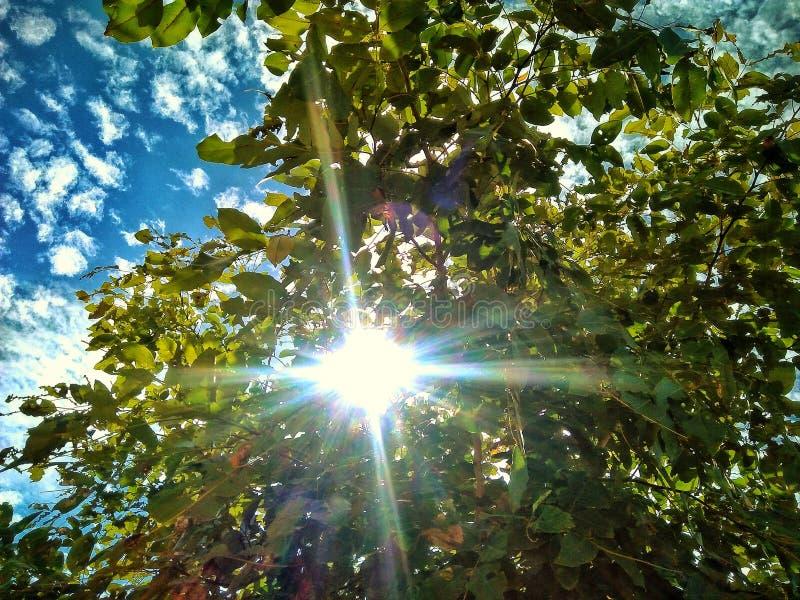 Lumière d'arbre de ciel confortable photographie stock libre de droits