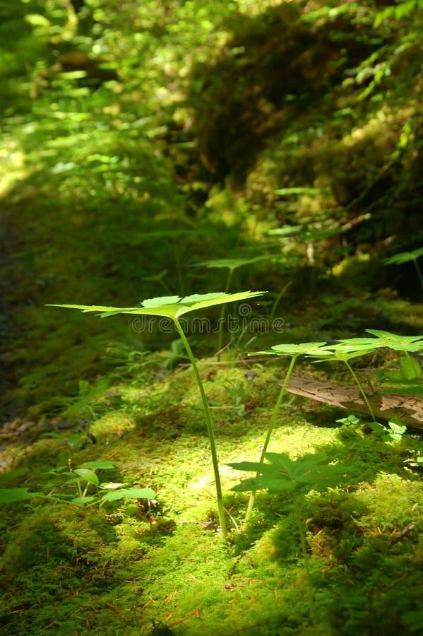 Lumière dans la forêt images stock
