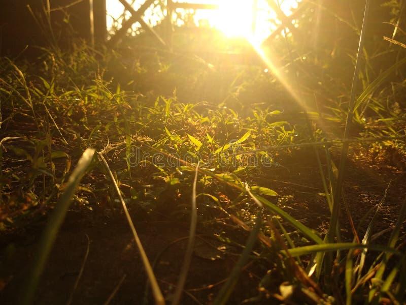 Lumière dans le matin photos libres de droits