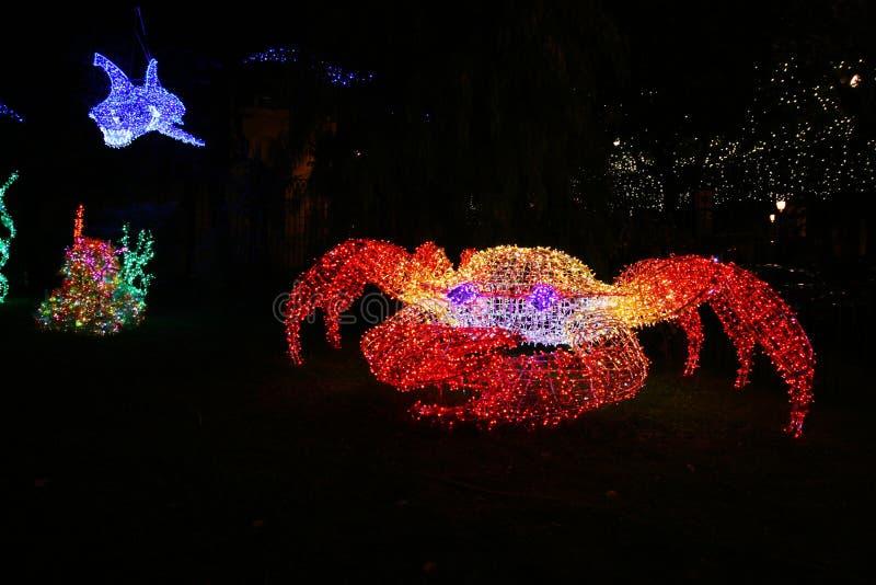 Lumière de crabe photos libres de droits