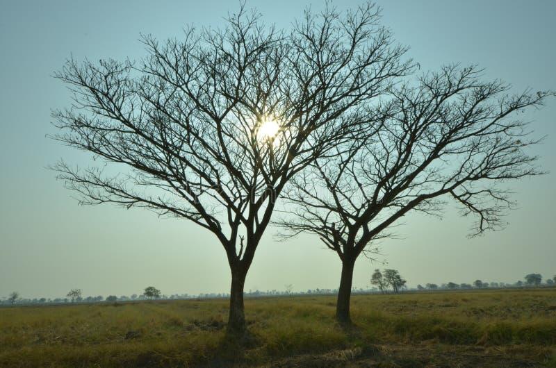 Lumière de matin derrière l'arbre image stock