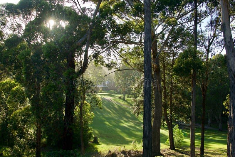 Lumière de matin sur le terrain de golf de Mollymook photo libre de droits